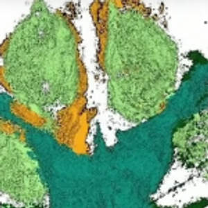 Какво откритие: Пронајден цвет стар 115 милиони години