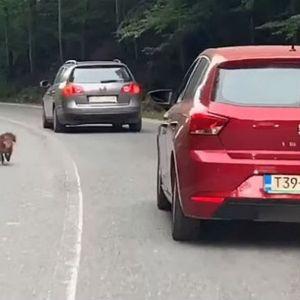 Куче кое неуморно трча по пат во БиХ растажи многумина