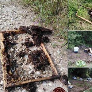 Мечкина гозба во Демирхисарско: Мечка му го украла сиот мед на пчелар од Прибилци