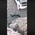 Љубов на плажа: Две змии водат страстен љубовен танц во Кипар