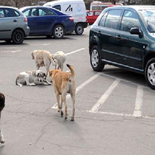 АНИМА МУНДИ: Во Аеродром убиваат кучиња, ни закони, ни полиција ништо не функционира