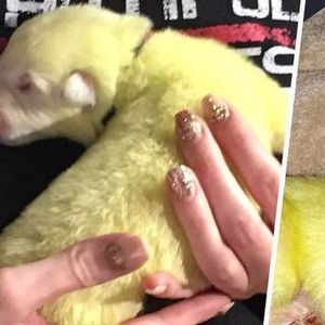 Бела германскa овчарка родила зелено кутре