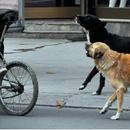 Конгрес на кучиња на Плоштад во Скопје