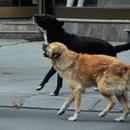 Дете и девојка искасани од кучиња во Центар