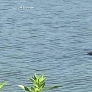 Маж на Флорида скокнал во езеро за да го спаси кучето од челуста на алигатор