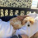 """Џеф Бриџис: """"После заразата со корона, борбата со ракот ми се чинеше како 'мачкина кашлица'!"""""""