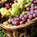 Нема договор за откупната цена на грозјето: Лозарите и винариите не се на иста фреквенција