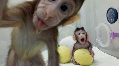 Клонирани мајмуни први на листата: Научни настани по кои ќе ја памтиме 2018