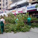 СЕ РАСЧИСТУВА ПО НЕВРЕМЕТО: Богдановиќ повика граѓаните да пријават паднати дрвја