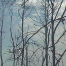 (ВИДЕО) ГОРИ НА ЗАКИНТОС: Се чекаат авиони на помош