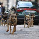 Две лица каснати од кучиња скитници во Скопје