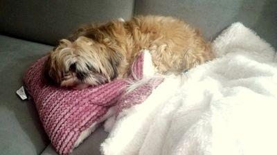 Сопствениците на миленици бараат измени во полицискиот час