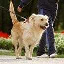 Владата ги остави истите термини за шетање на миленичиња во текот на продолжениот викенд