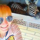 Две нови зебри пристигнаа во ЗОО: Јашари сака да се гали, Јанош е погорделив!