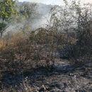 Пожарот во Карбинци е ставен под контрола