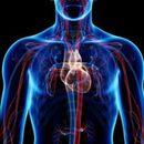 Како да ја подобрите циркулацијата на крвта