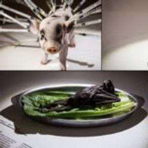 За вкусовите не се дискутира… Но, ѕирнете во Музејот на одвратна храна во Шведска