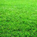 Сеидба на трева