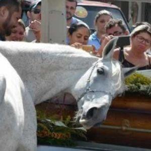 На погреб му го донеле коњот: Погледнете ја неговата реакција