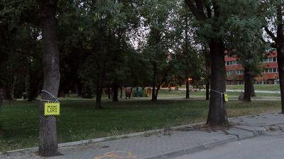 Скопските дрвја во синџири