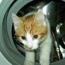 Влегла во машината за перење, а сопствениците ја пуштиле заедно со постелнината – Еве што се случило