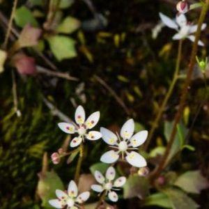 Откриени нови видови цвеќиња досега непознати за ботаничарите и целиот свет