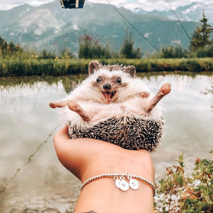 Најсреќниот еж на светот патува по целиот свет со насмевка