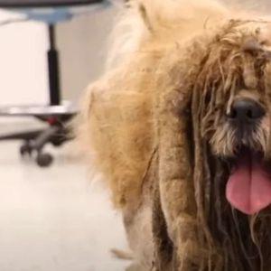 Ќе се разнежните: Видеото од шишањето на напуштено куче го освои интернетот