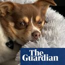 'Riddled with exclusions': pet insurers slapped with a Shonky award