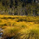 Bushwalker missing in Tasmania's Lake St Clair region found alive