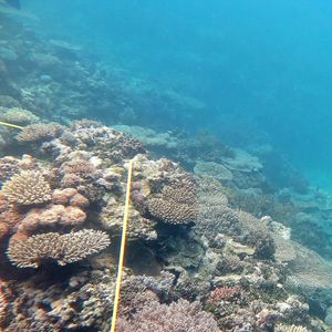 Senate inquiry into Great Barrier Reef seen as bid to discredit Queensland laws
