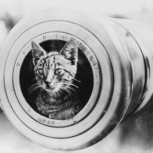Топ котките в историята на света