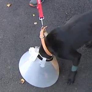 Спасиха пребитото в Ямболско куче