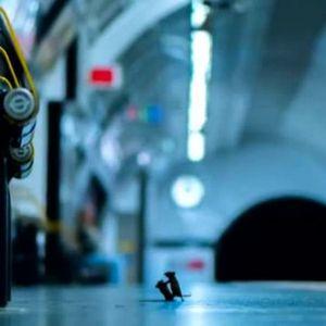 Снимка на годината: Бой между мишки в метрото в Лондон