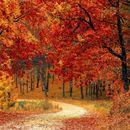 В 22 часа и 21 минути на 22 септември настъпва астрономическата есен