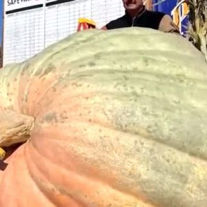 Фермери от Охайо отгледаха 990-килограмова тиква