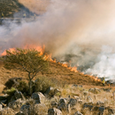 58 огнеборци  се борят с пожар край Шумен