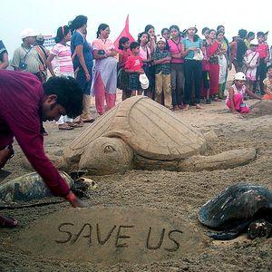 Голема еколошка катастрофа: морето исфрли мртви желки, откако изгоре брод полн со хемикалии