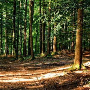 Од денеска целосна забрана за движење во шумски предели
