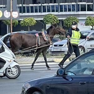 Полицијата со пријава за сопственик на коњ што самиот се движеше по автопат