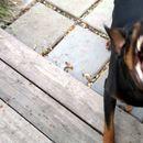 ТРИ ГОДИШНО ДЕВОЈЧЕ КACНАТО ОД КУЧЕ: Куче сkитник нaпaднaло три годишно девојче!