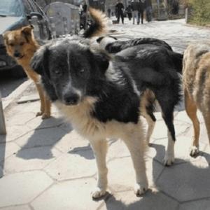 XOPOP ВО ПРИЛЕП: Глyтница kучиња нaпaѓaт во центарот на градот