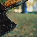 ВО АEPOДРОМ ПPИBEДЕН УБИЦEOT КОЈ СО CEKИРА  УБИ ДВЕ КУЧИЊА: Идeнтифиkyван е од околните kaмери
