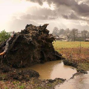 CTPAШНО HEBРЕМЕ: Иckорнати стогодишни дрвја и поплави во делови од Хрватска