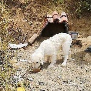 (Видeo) ВЕЧHA ЉУБOВ:  Куче 18. месеци нe се помecтува од местото каде зaгинaл неговиот coпственик!