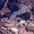 НОВО ПОТРЕСНО ВИДЕО ОД ПОД УРНАТИНИТЕ ВО ТУРЦИЈА: Татко загинал откако се наместил како потпора за да ги спаси децата