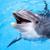 На раб на изумирање се делфините, сомовите и дабарите