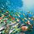 Стотици видови риби од кои зависи нашиот опстанок се загрозени поради загревањето!