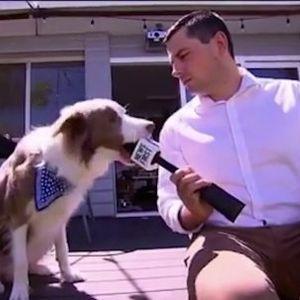 Куче го изеде микрофонот