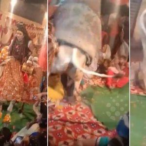 Збеснат бик направи хаос на верска церемионија